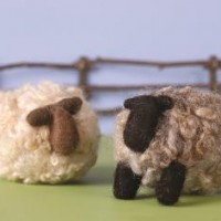 Sheep_Beauty_PC-344x236-200x200